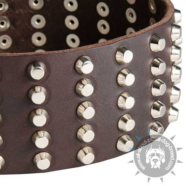 Leather Pitbull Collar with Decorated with Rows of Studs