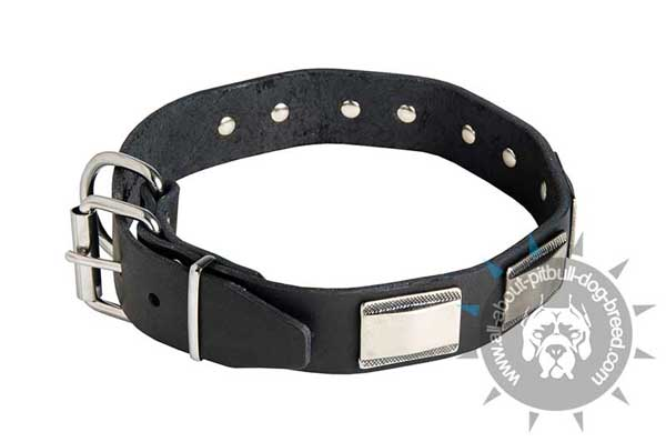 Handmade Leather Pitbull Collar with Nickel Plates
