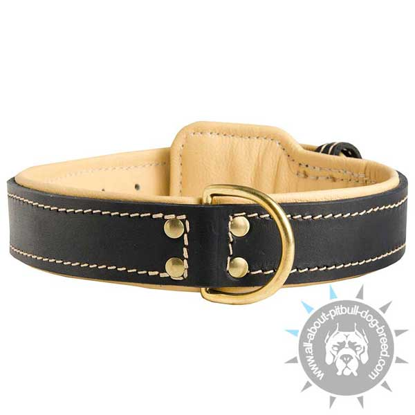 Stitched Pitbull Collar Padded with Fur Saver Leather Plate