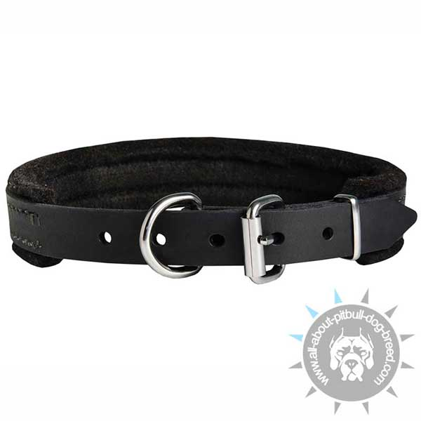 Padded Leather Pitbull Collar with Nickel Plated Hardware
