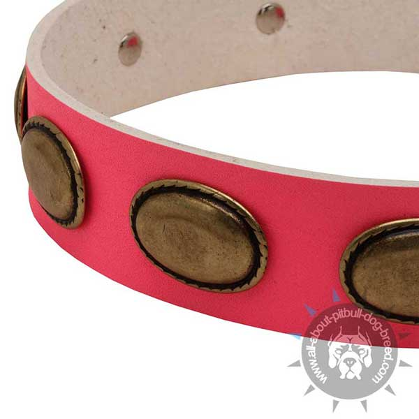Pink Leather Pitbull Collar Strap Decorated with Oval Brass Plates