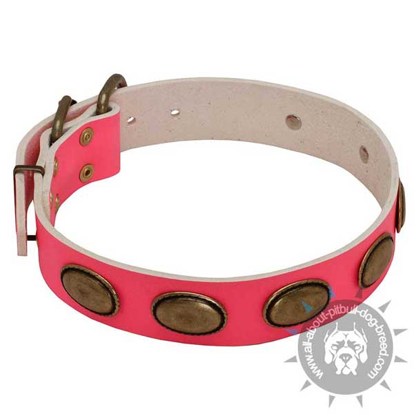 Decorated Pink Leather Pitbull Collar with Oval Brass Plates