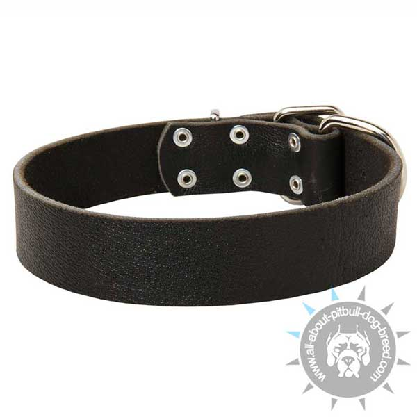 Pitbull Collar for Daily Use