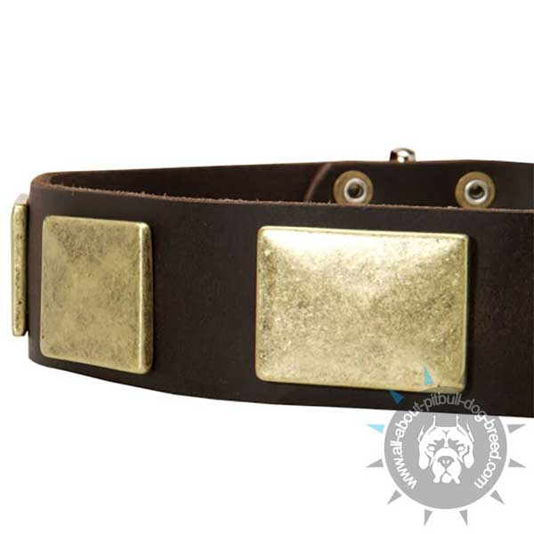 Leather Pitbull Collar Strap Decorated with Large Old Brass Plates