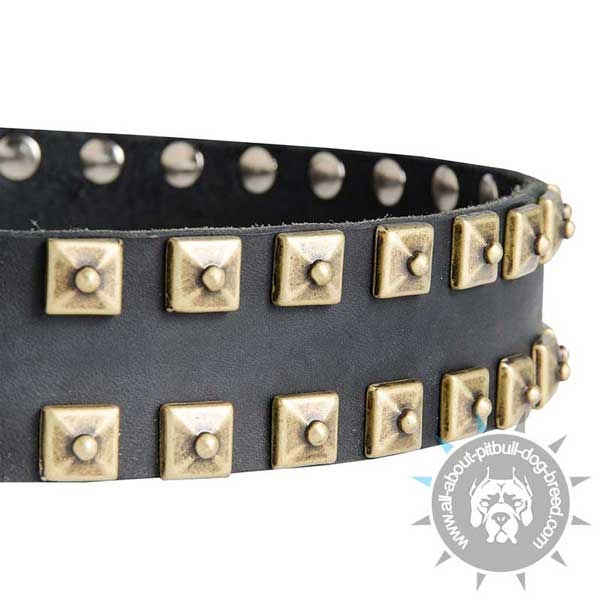 Leather Pitbull Collar Strap Decorated with Hand Set Square Brass Studs