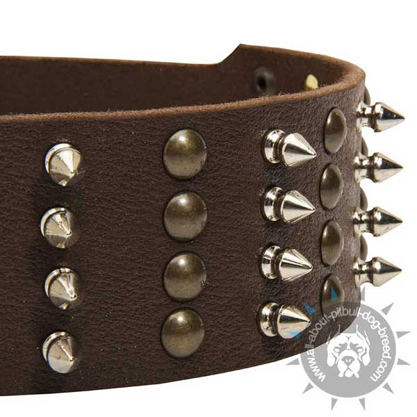 Wide Leather Pitbull Collar with 5 Rows Brass Studs and Nickel Spikes