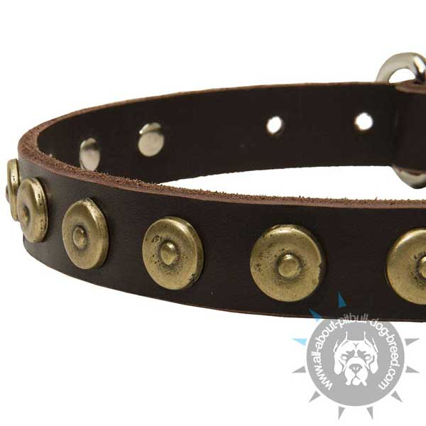 Leather Pitbull Collar Strap with Dotted Brass Circles