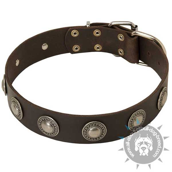Decorated Pitbull Collar for Daily Use