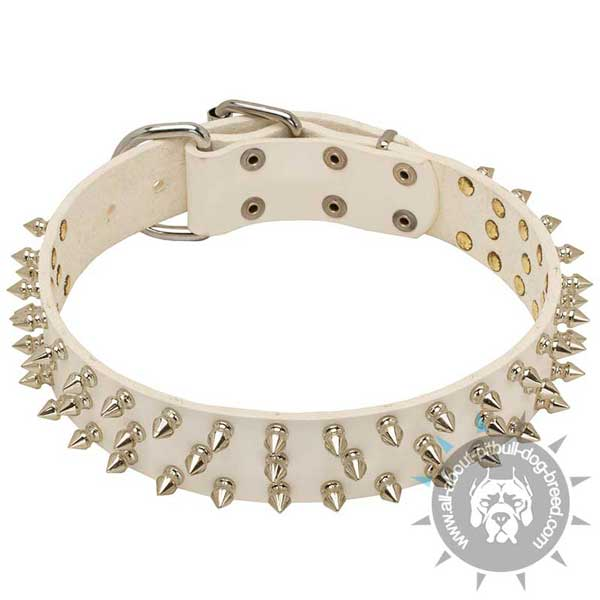 White Leather Pitbull Collar Spiked in 3 Rows