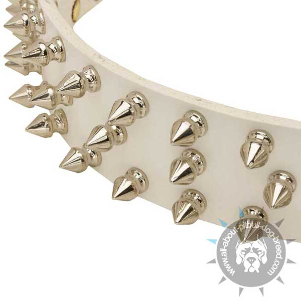 White Leather Pitbull Collar Strap Decorated with 3 Rows Nickel Plated Spikes
