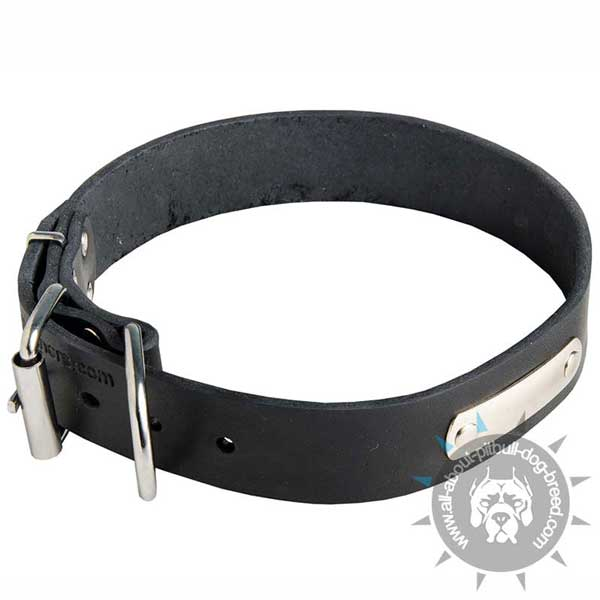Leather Dog Collar for Quick Pitbull Identification