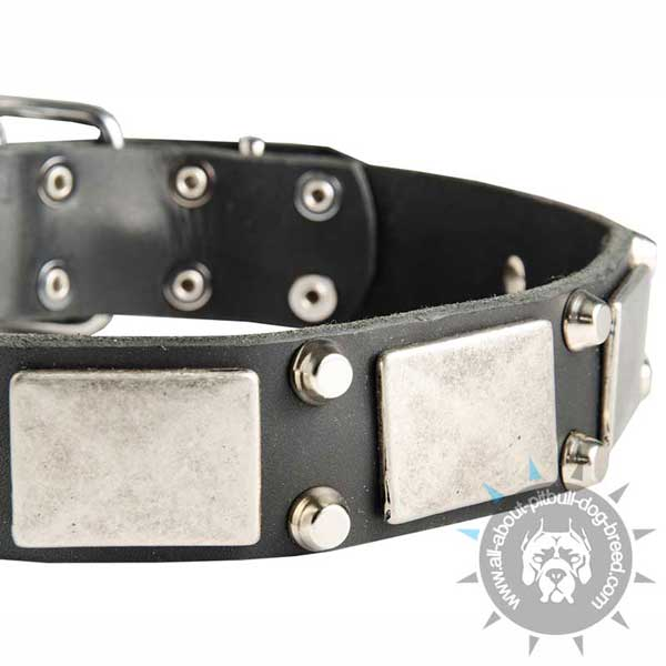 Leather Pitbull Collar with 2 Pyramids between Plates