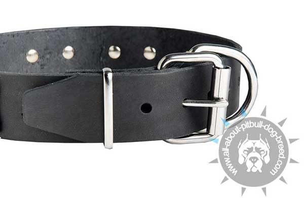 Leather Pitbull Collar Equipped with Buckle and Ring