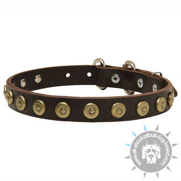 Leather Pitbull Collar Decorated with Brass Circles with Center Dots