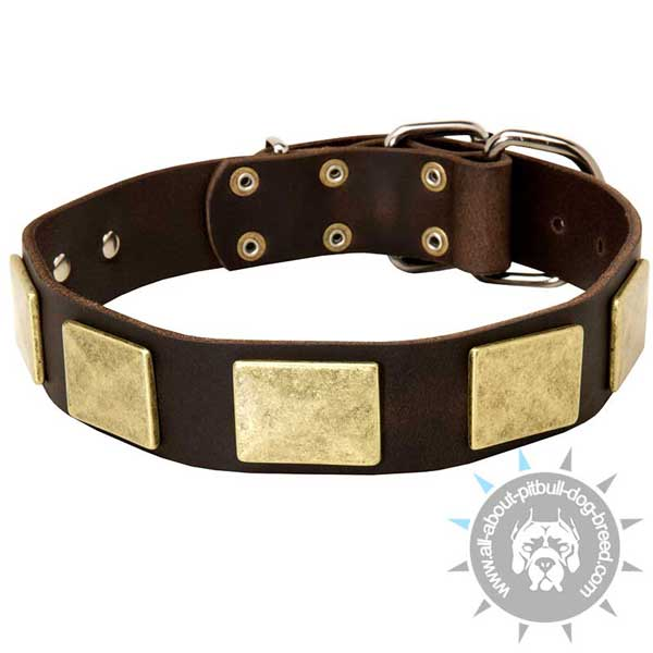 Leather Pitbull Collar with Massive Brass Plates