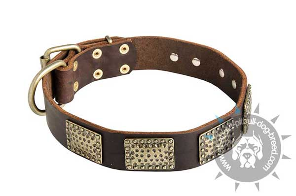 Decorated Leather Pitbull Collar with Massive Dotted Brass Plates
