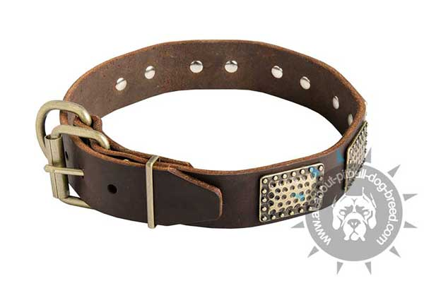 Decorated Leather Pitbull Collar with Riveted Plates