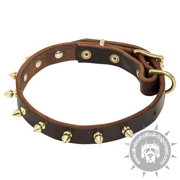 Leather Pitbull Collar with 1 Row Brass Spikes