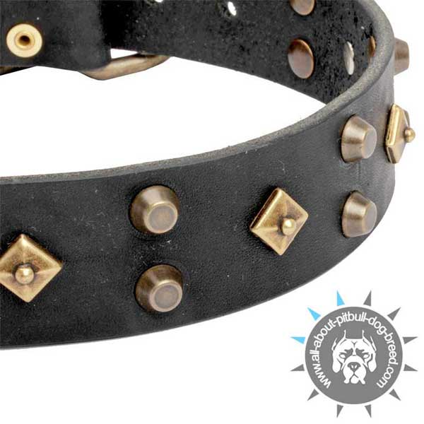 Posh Black  Leather Pitbull Collar with Brass Cones and Bronze Dotted Rhombus