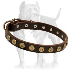 Leather Dog Collar With Dotted Brass Circles