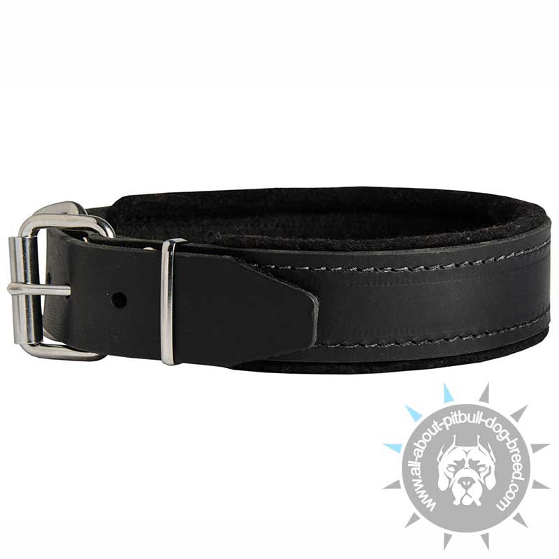 Get Now Padded Leather Dog Collar Pitbull Training Collars
