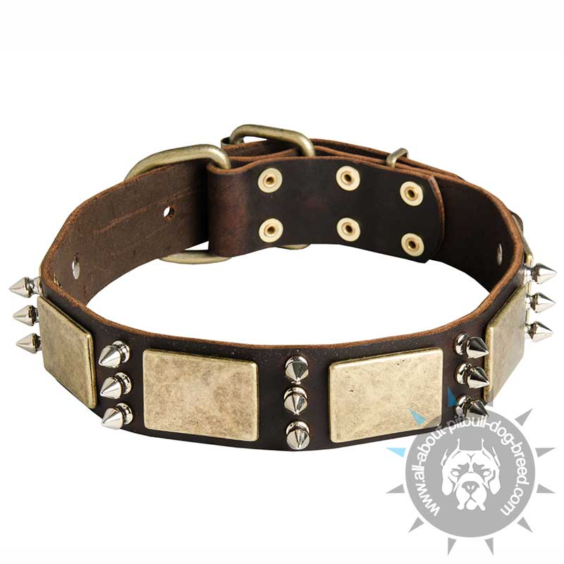 to wear - Leather stylish dog collars video