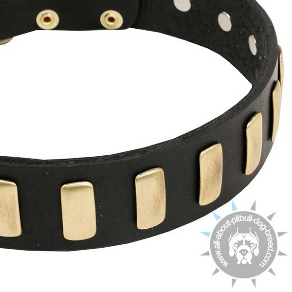 Genuine Leather Dog Collar with Brass Plates
