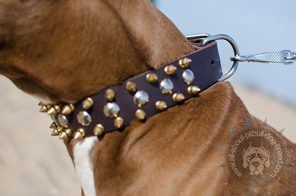 Leather Pitbull collar with rust-resistant fittings