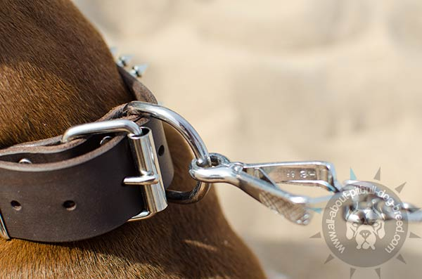 Pitbull leather collar with sturdy D-ring