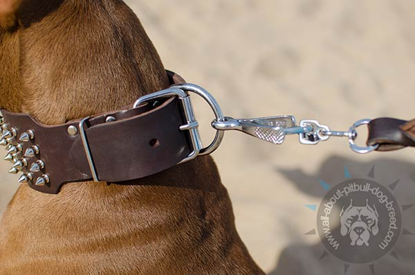 Pitbull collar with easy to attach D-ring