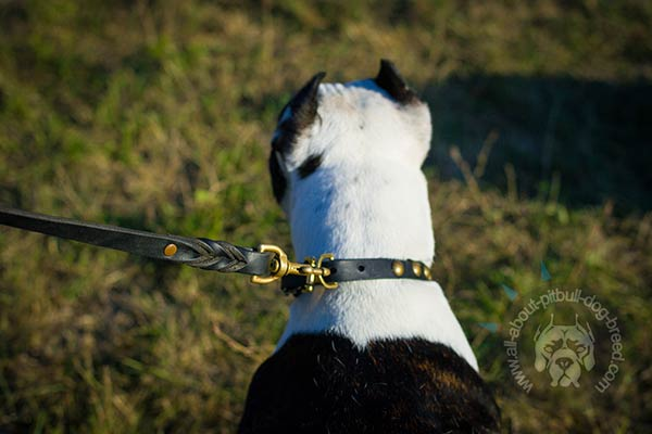 Leather Pitbull collar with sturdy D-ring