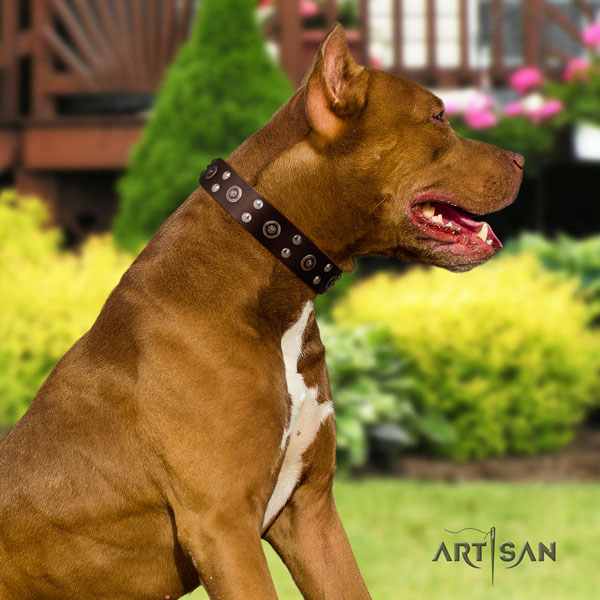 Pitbull easy adjustable full grain natural leather dog collar with significant decorations