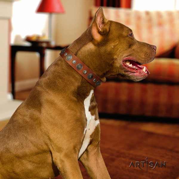 Pitbull convenient genuine leather dog collar with exquisite adornments