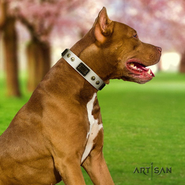 Pitbull easy wearing genuine leather dog collar with significant adornments