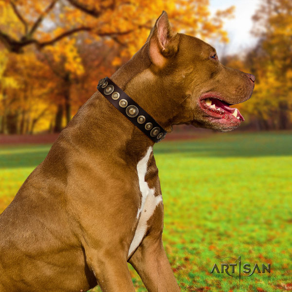 Pitbull easy wearing full grain natural leather dog collar with exquisite adornments