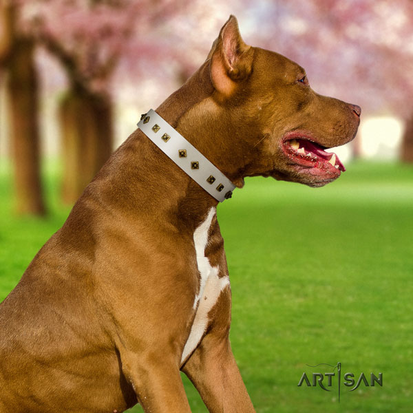Pitbull convenient full grain natural leather dog collar with significant embellishments