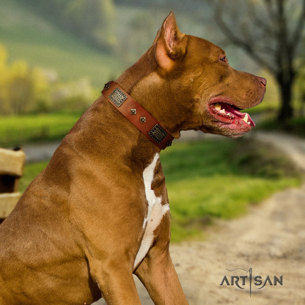 Pitbull easy adjustable full grain natural leather dog collar with impressive adornments