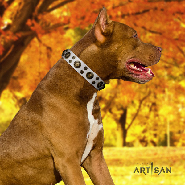 Pitbull easy to adjust full grain genuine leather dog collar with inimitable decorations