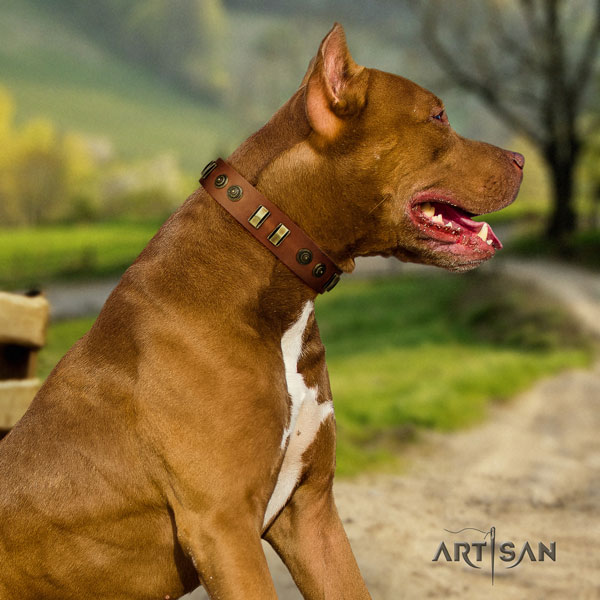 Pitbull best quality natural genuine leather dog collar with significant adornments
