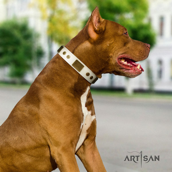 Pitbull handcrafted full grain leather dog collar with stylish design embellishments