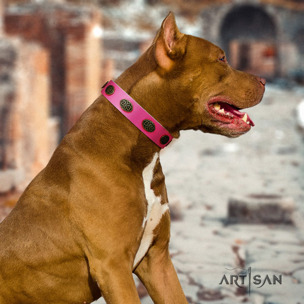 Pitbull handcrafted full grain genuine leather dog collar with trendy studs