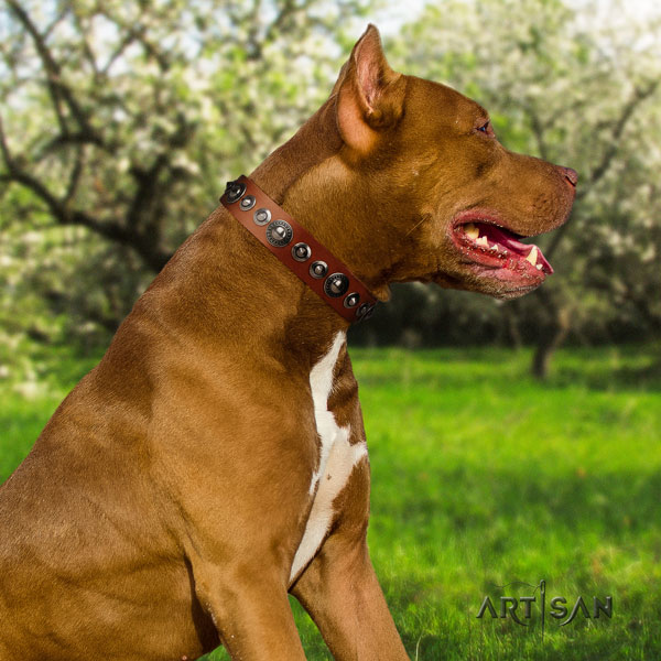Pitbull easy wearing genuine leather dog collar with unusual embellishments