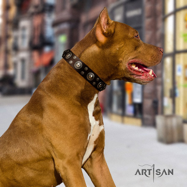 Pitbull handcrafted full grain genuine leather dog collar with exceptional embellishments