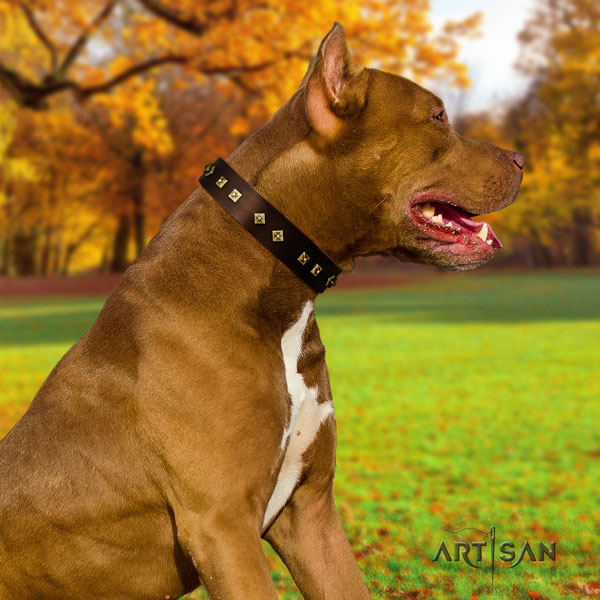 Pitbull easy to adjust natural genuine leather dog collar with stylish design embellishments