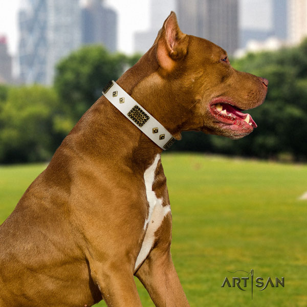 Pitbull convenient full grain genuine leather dog collar with top notch studs