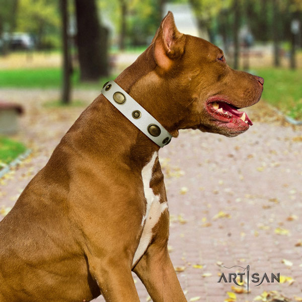 Pitbull comfortable natural genuine leather dog collar with inimitable embellishments