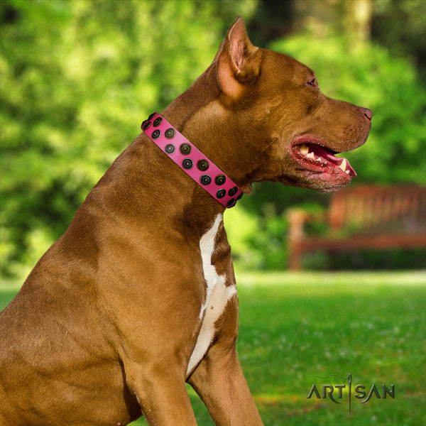 Pitbull easy adjustable natural genuine leather dog collar with top notch adornments