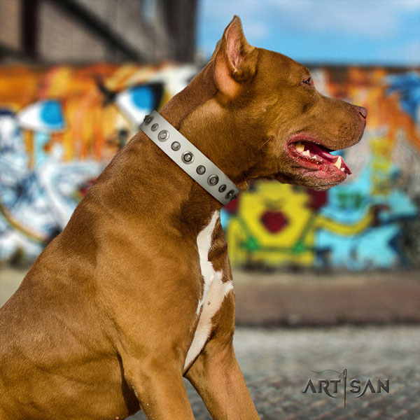 Pitbull perfect fit leather dog collar with unique adornments