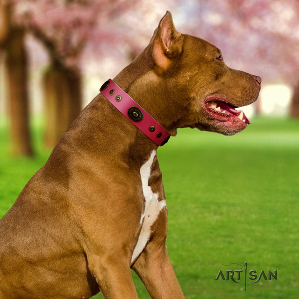 Pitbull adjustable genuine leather dog collar with awesome decorations