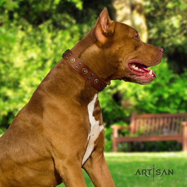 Pitbull handcrafted natural genuine leather dog collar with extraordinary adornments
